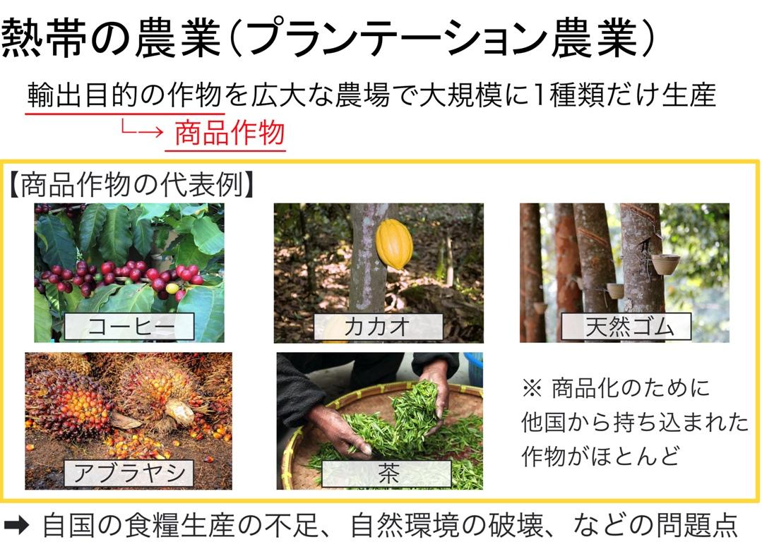 熱帯のプランテーション農業
