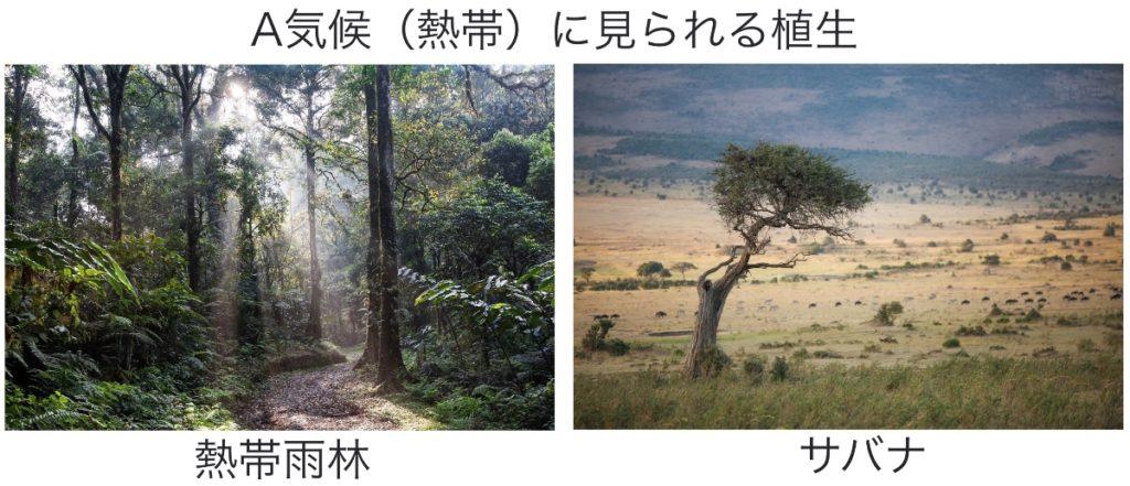 熱帯にみられる熱帯雨林とサバナ