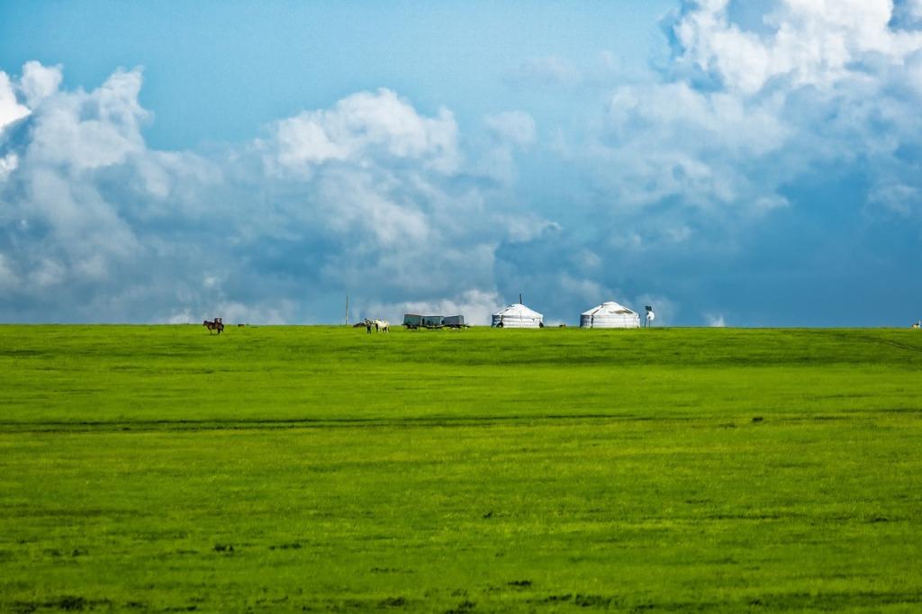 ステップ気候に広がる草原