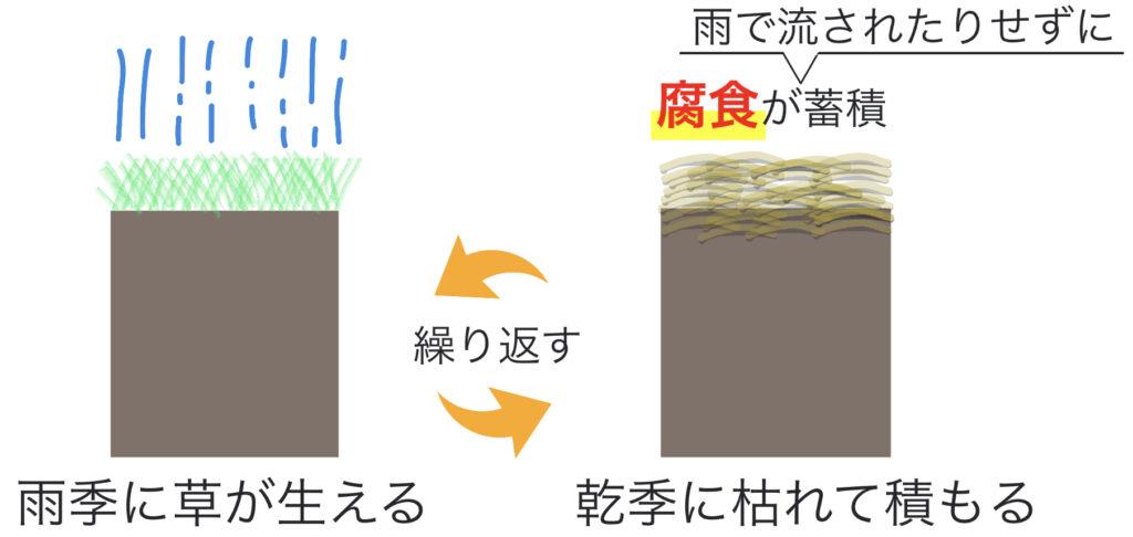 黒色土(チェルノーゼム)の形成される仕組み